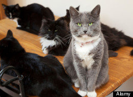Man Divorces Wife Over Her 550 Cats