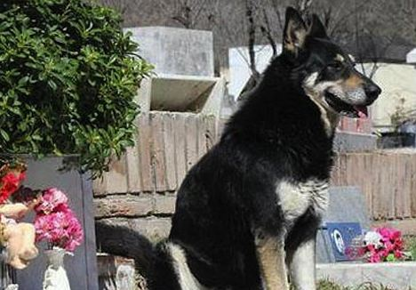 Dog Stands Guard Over Owner's Grave For 7 Years