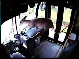 Deer crashes through windshield of bus & walks out front door