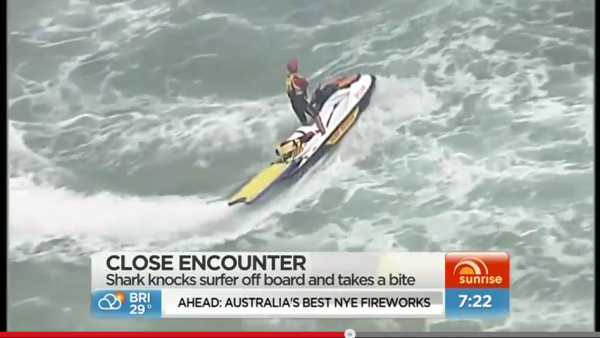 Surfer knocked off board by shark