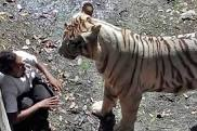 Tiger Attack on Student in Delhi Zoo!!