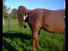 YUCK! Horse poops on woman's head!